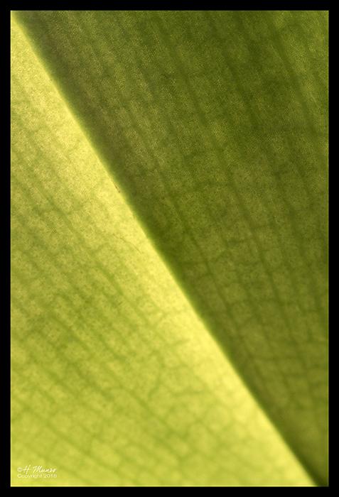 Chlorophyll 1840401 BLOG