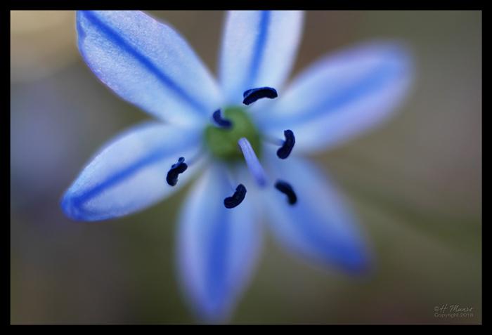 Blue blooms 1860646 BLOG