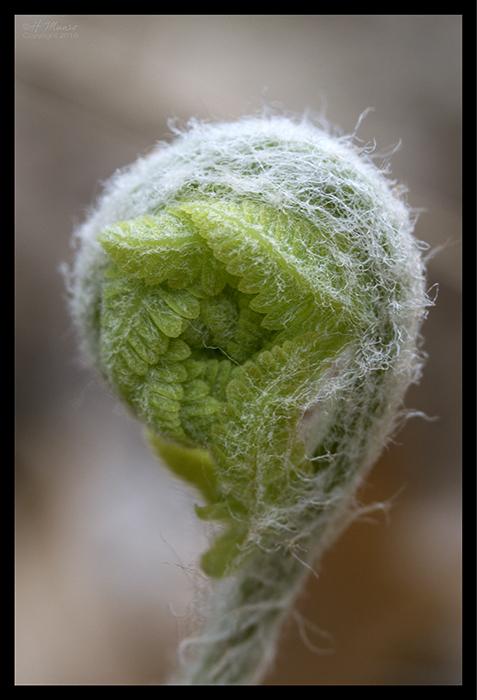 Butler young fern 1860244 BLOG
