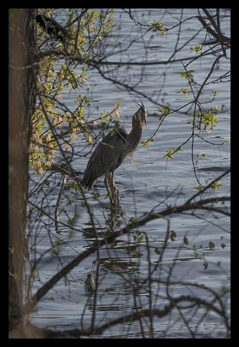 Como heron 1870208 BLOG