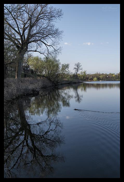 Como lake muskrat 1870110 BLOG