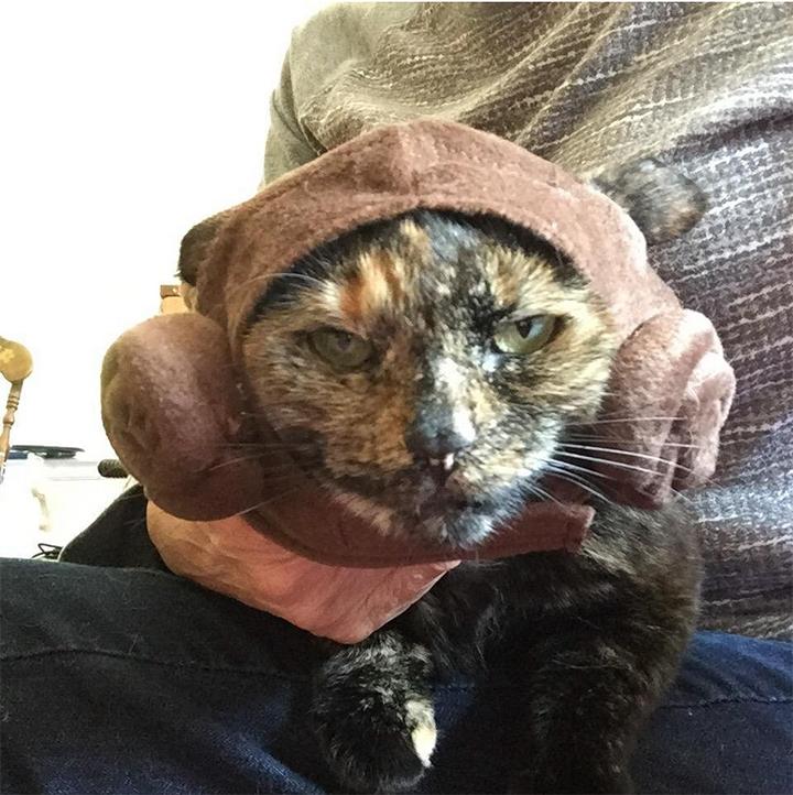 Cat Yoda kill
