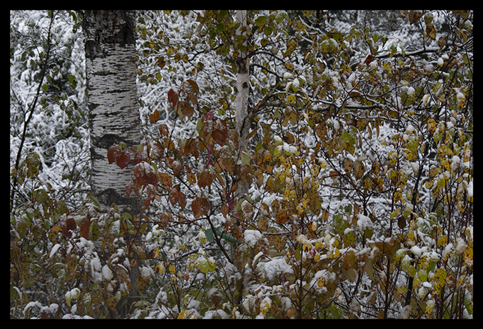 Birch colors 1340965 BLOG