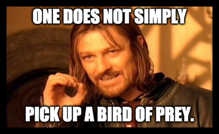 Bird of prey meme BLOG