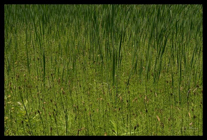 Butler reeds 1320139 BLOG