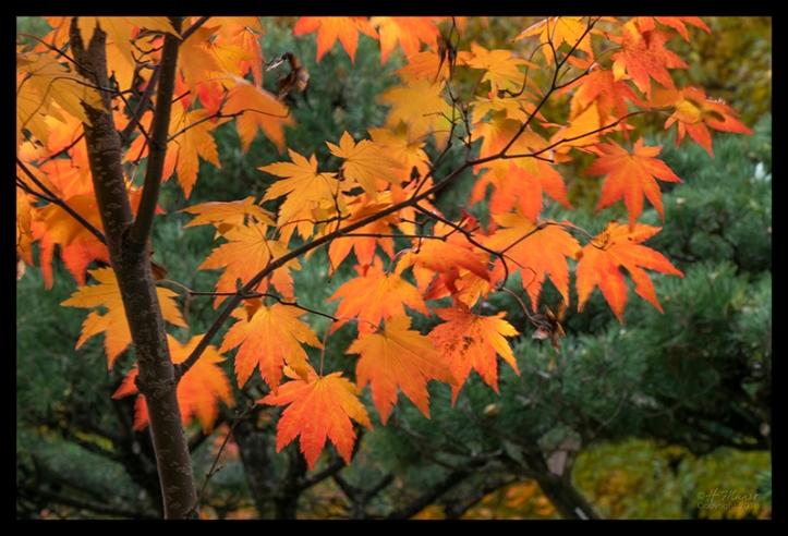 Como Japanese garden 1360215 BLOG