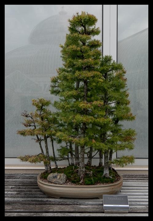 Como Japanese garden 1360249 BLOG