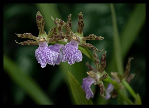 Como orchid 1360253 cBLOG