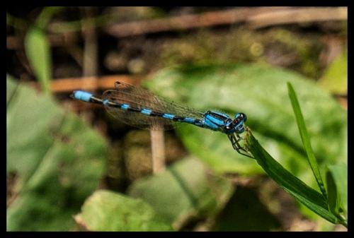 Dragonfly 1330305 BLOG