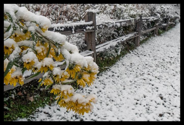 Flowers in snow 1360636 BLOG