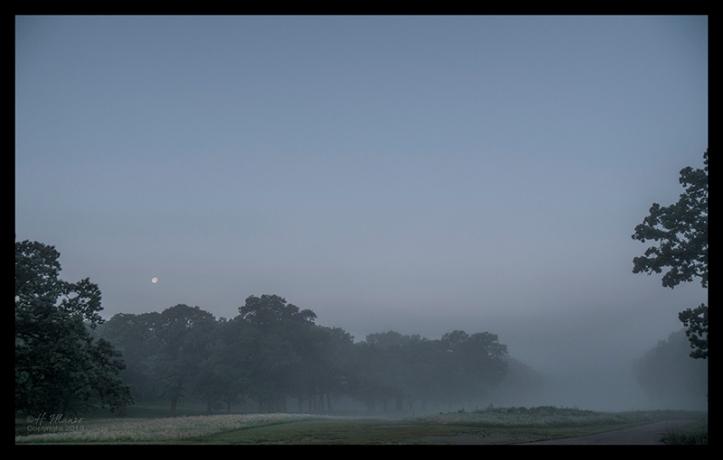 Fog 1310355 BLOG