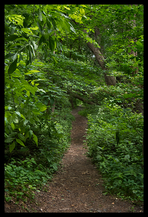 Forest bath 1310744 DK BLOG