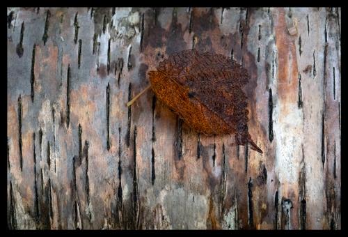 Leaf on birch 1350301 BLOG