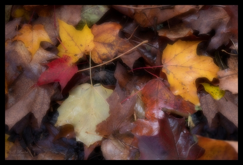 Leaves 1350414 BLOG
