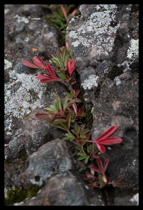 Lichen and moss 1350613 BLOG