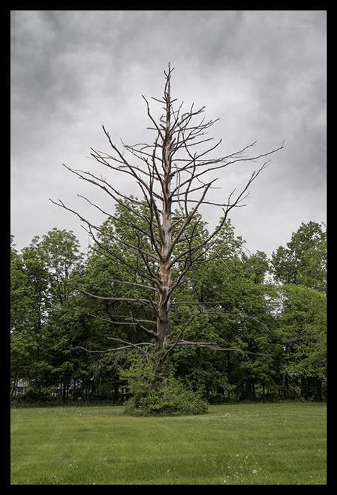 Locust lodge tree 1310250 CL BLOG