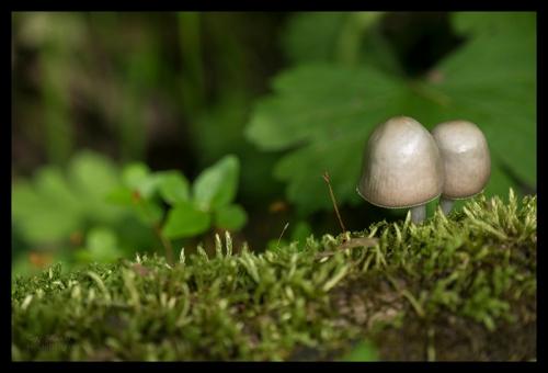 Mushrooms 1780335 BLOG