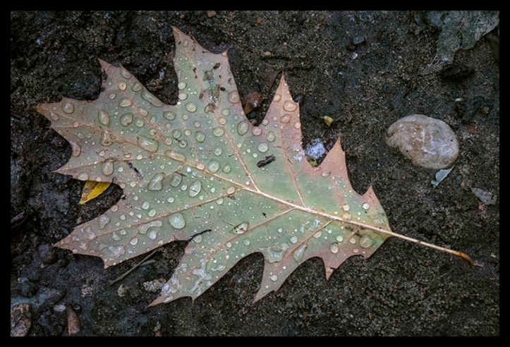 Oak leaf with water 1360549 CC BLOG
