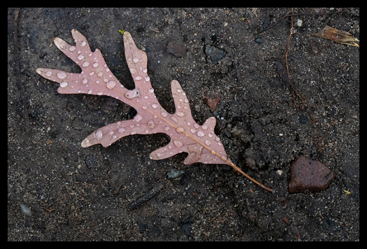 Oak leaf with water 1360572 BLOG
