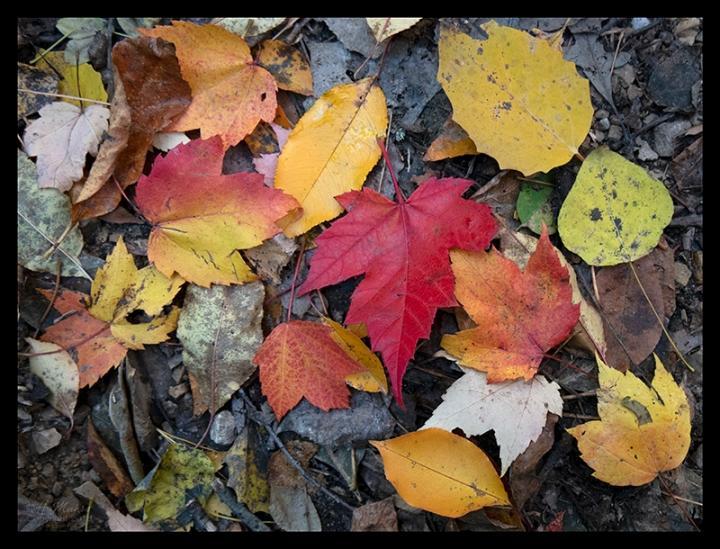 Quaking bog leaves 1360138 BLOG