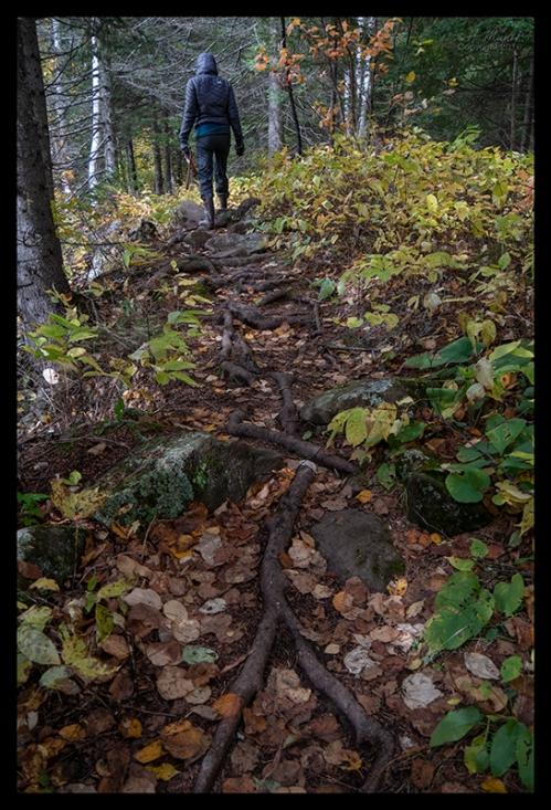 Rough trail 1350757 BLOG