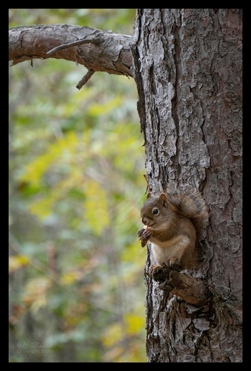 Superior squirrel 1350664 BLOG