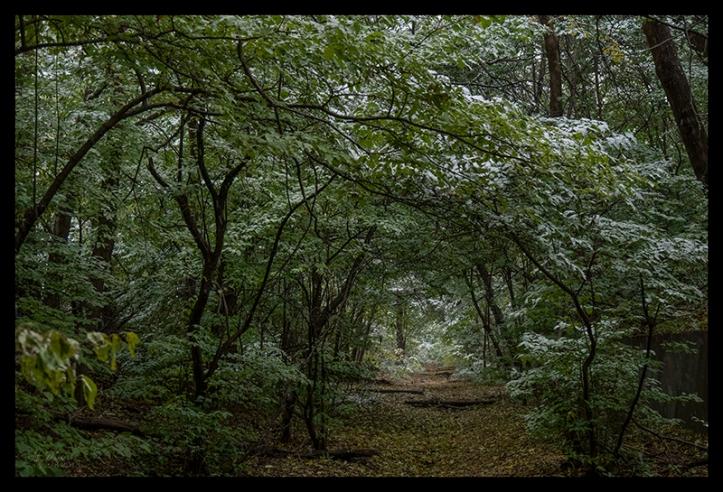 Woods winterfall 1360396 BLOG