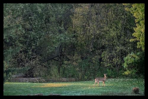 deer 1000061 blog
