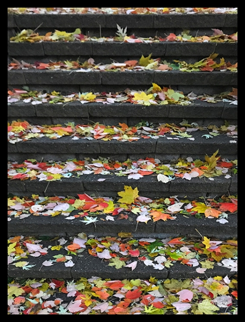 fall leaves on steps img_9348 blog