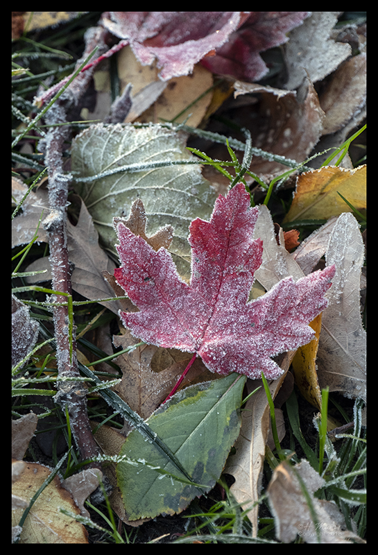 leaf with frost 1000128 blog