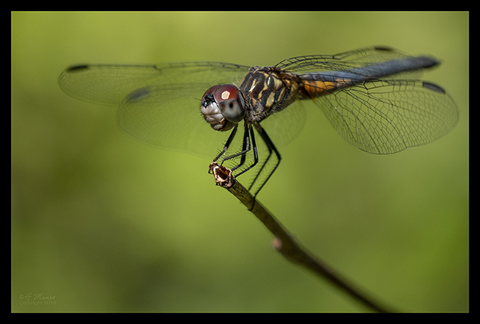 Dragonfly 1000210 CR BLOG