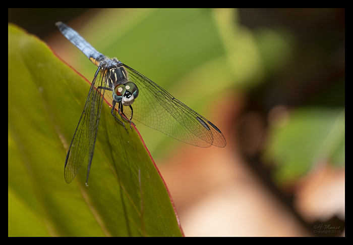 Dragonfly 1000322 CR BLOG