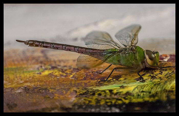 Dragonfly 1000379 BLOG