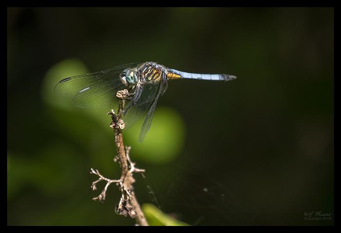 Dragonfly 1000415 BLOG