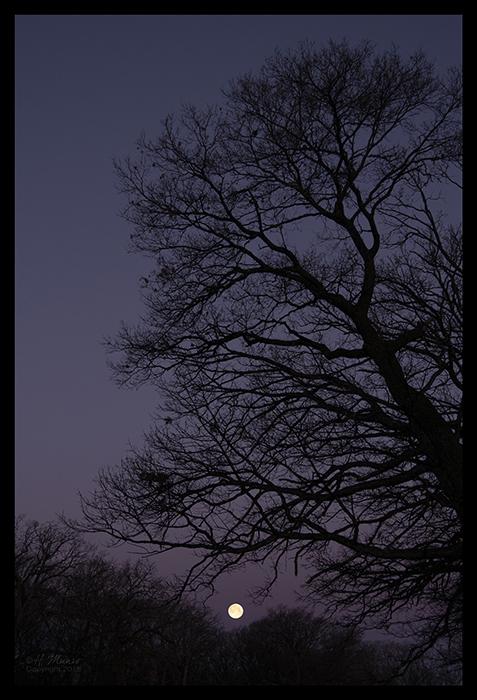 Moonset 1400040 BLOG