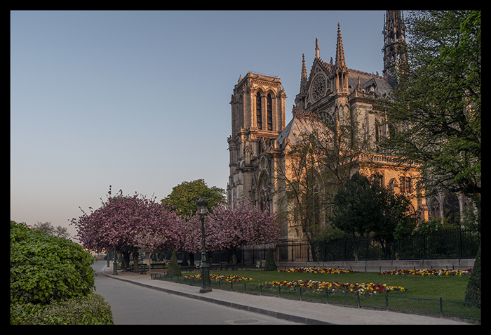 Notre Dame in bloom 1110778 BLOG
