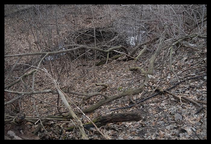 Twighenge 1400048 2 BLOG