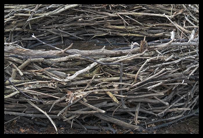 Twighenge 1400133 BLOG