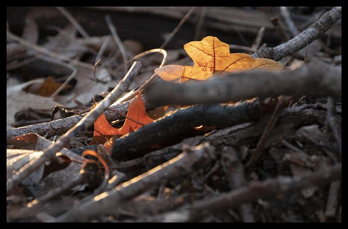 Twighenge 1400149 BLOG