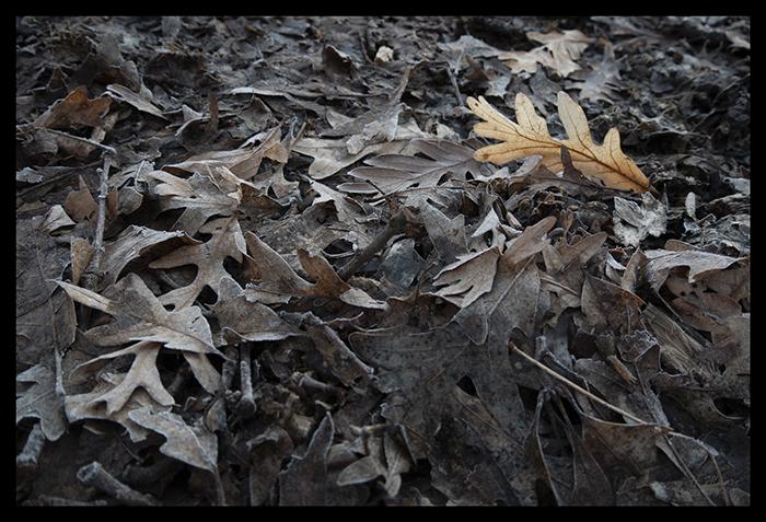Twighenge 1400155 BLOG