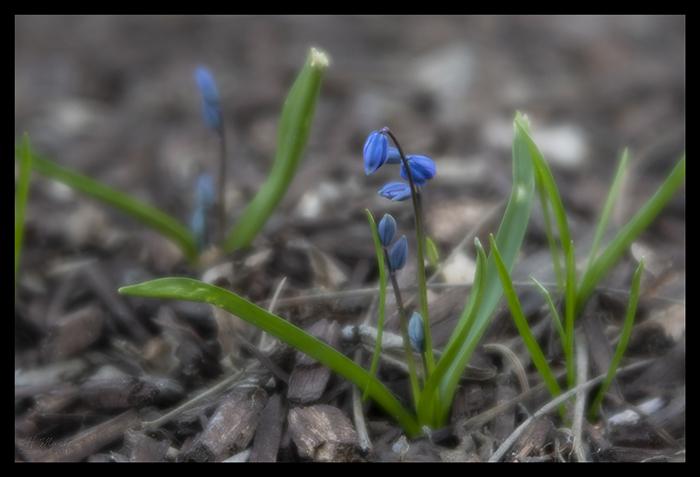 Wee blooms 1400182 BLOG